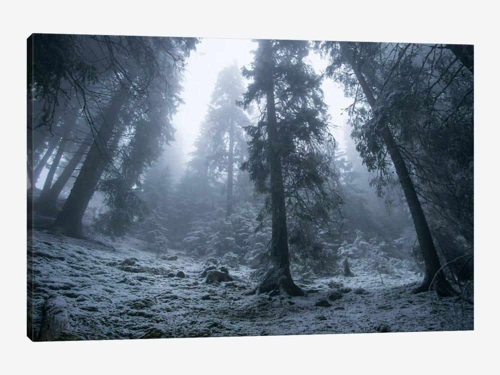 The First Snow by Adrian Borda 1-piece Canvas Artwork