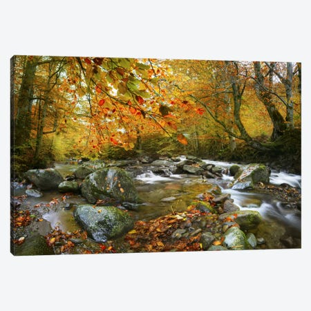 The Rusty River Canvas Print #BOR62} by Adrian Borda Canvas Art Print