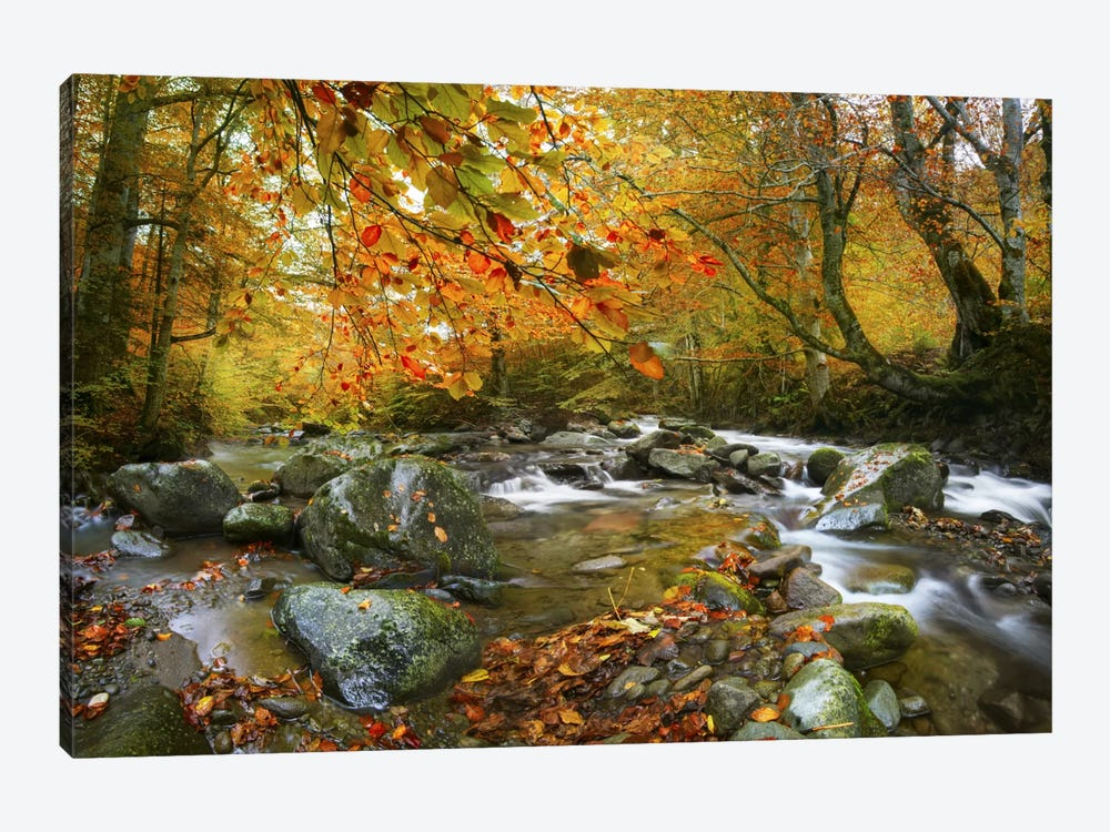 The Rusty River by Adrian Borda 1-piece Canvas Print