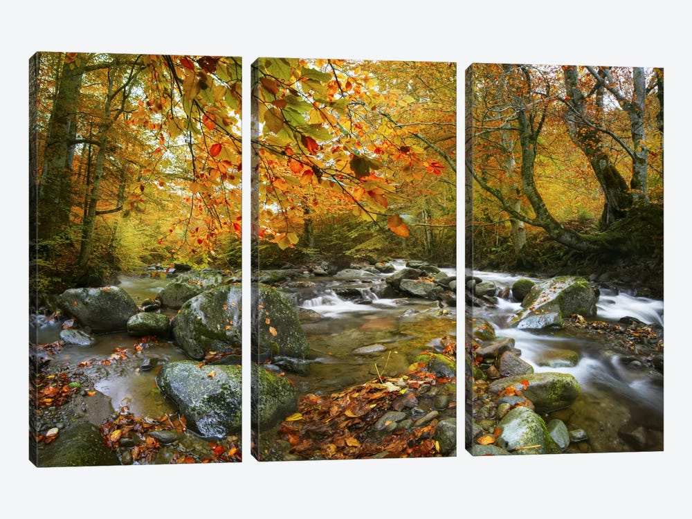 The Rusty River by Adrian Borda 3-piece Canvas Print
