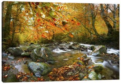 The Rusty River Canvas Art Print
