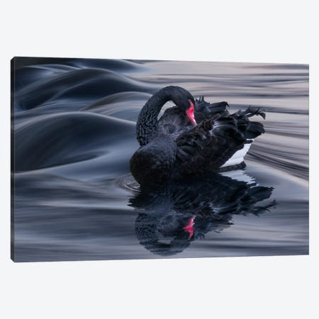 Black Swan Dune Canvas Print #BOR9} by Adrian Borda Canvas Art