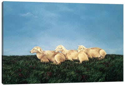 Counting Sheep Canvas Art Print