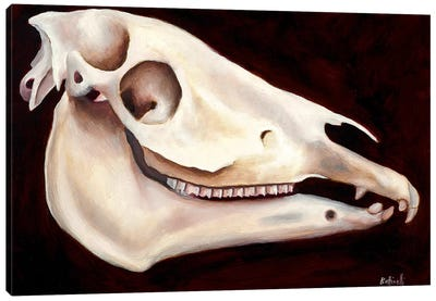 Horse Head II Canvas Art Print