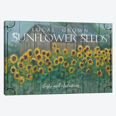 Sunflower Seeds Canvas Print #BOU84} by Marnie Bourque Art Print