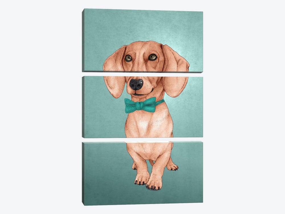 The Wiener Dog 3-piece Canvas Art