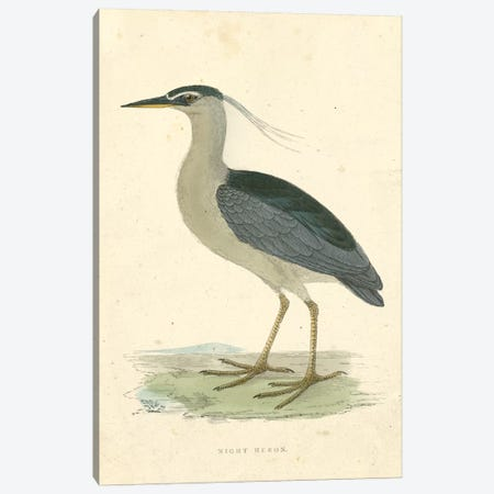 Vintage Night Heron  Canvas Print #BRM1} by Beverley R. Morris Art Print