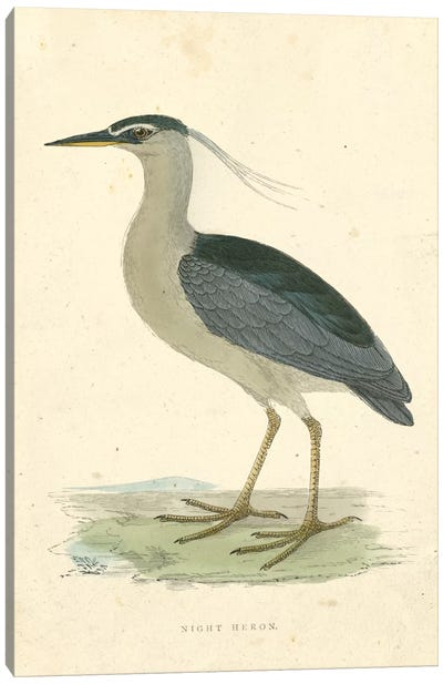 Vintage Night Heron  Canvas Art Print