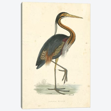 Vintage Purple Heron  Canvas Print #BRM2} by Beverley R. Morris Canvas Art Print