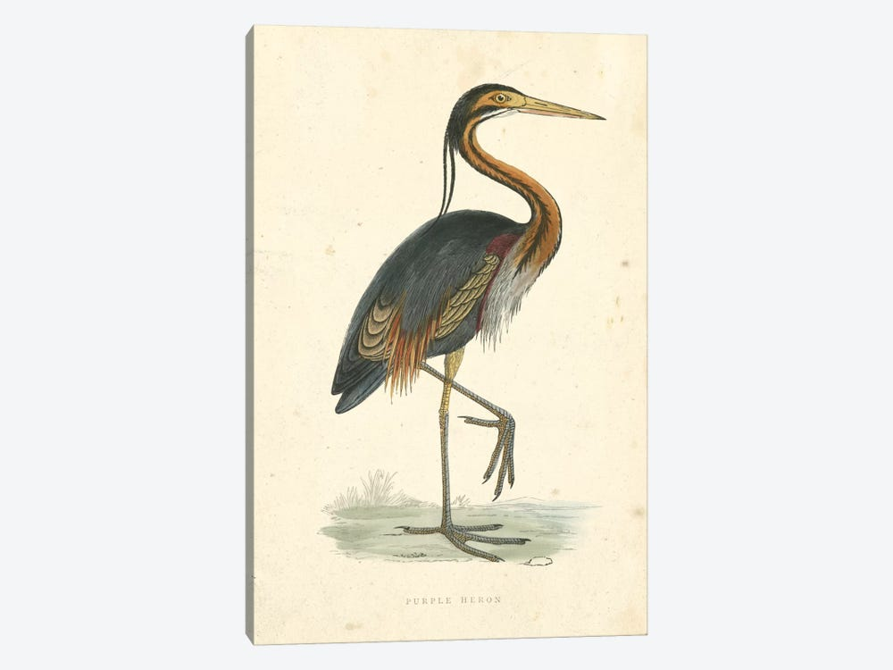 Vintage Purple Heron  by Beverley R. Morris 1-piece Canvas Wall Art
