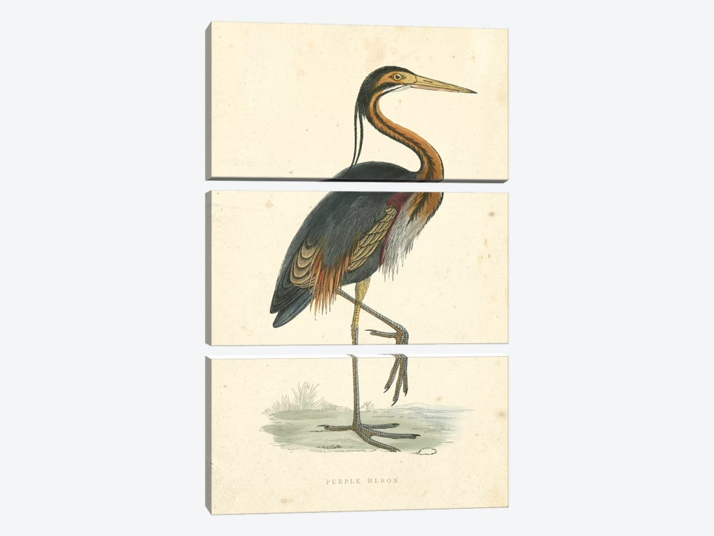 Vintage Purple Heron  by Beverley R. Morris 3-piece Canvas Art