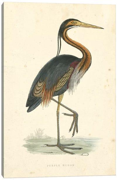 Vintage Purple Heron  Canvas Art Print