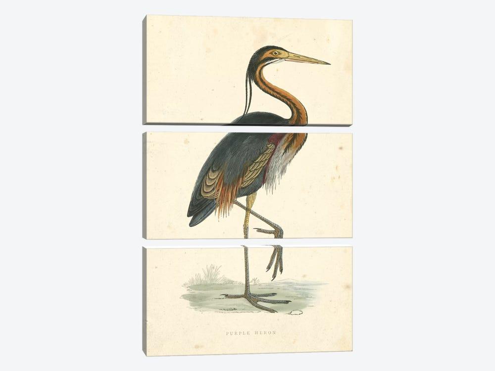 Vintage Purple Heron  by Beverley R. Morris 3-piece Canvas Art