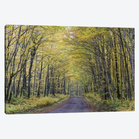 Forest Path In Autumn, Jacques-Cartier National Park, Province Quebec, Canada, October Canvas Print #BRO1} by Bernd Rohrschneider Canvas Art Print
