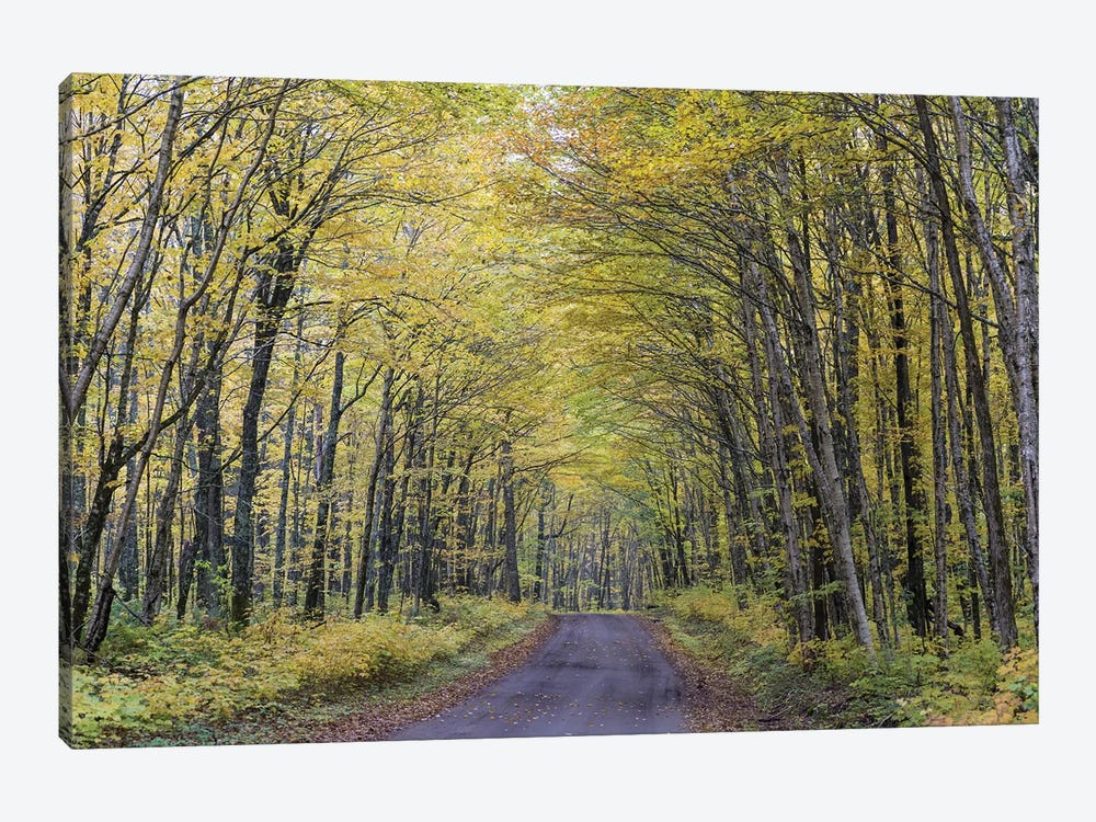 Forest Path In Autumn, Jacques-Cartier National Park, Province Quebec, Canada, October 1-piece Art Print