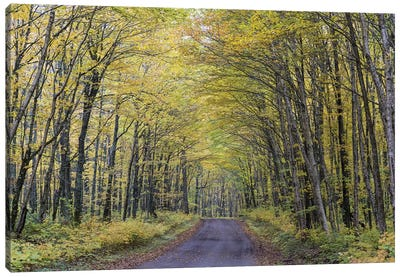 Forest Path In Autumn, Jacques-Cartier National Park, Province Quebec, Canada, October Canvas Art Print