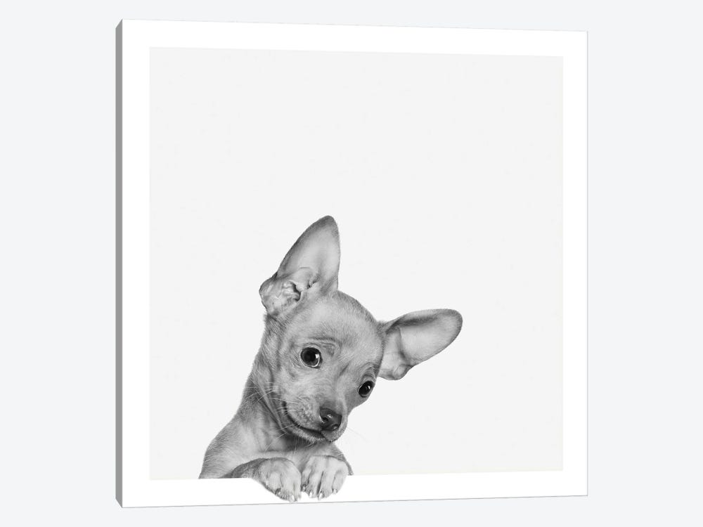 Sweet Chihuahua by Jon Bertelli 1-piece Canvas Print