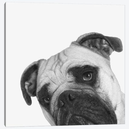 Que Pasa? Canvas Print #BRT15} by Jon Bertelli Canvas Art Print