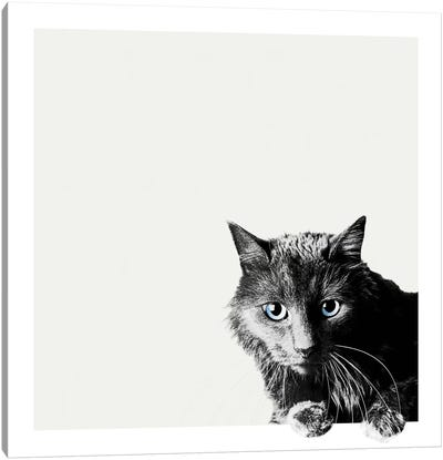 Inquisitive Canvas Art Print