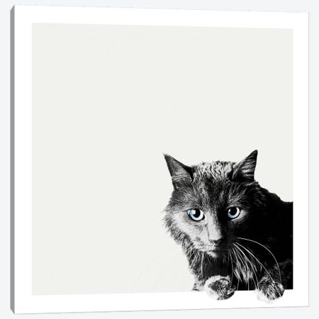 Inquisitive Canvas Print #BRT2} by Jon Bertelli Art Print