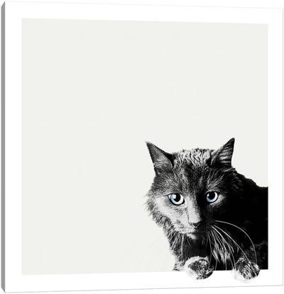 Inquisitive Canvas Art Print
