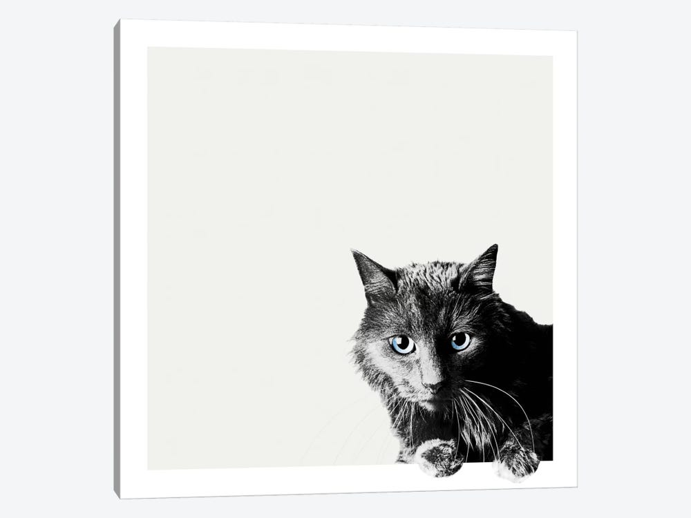 Inquisitive by Jon Bertelli 1-piece Canvas Print