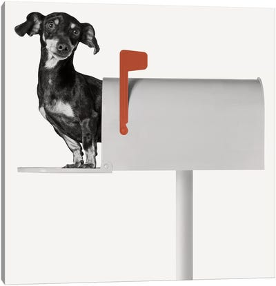 You've Got Mail Canvas Art Print