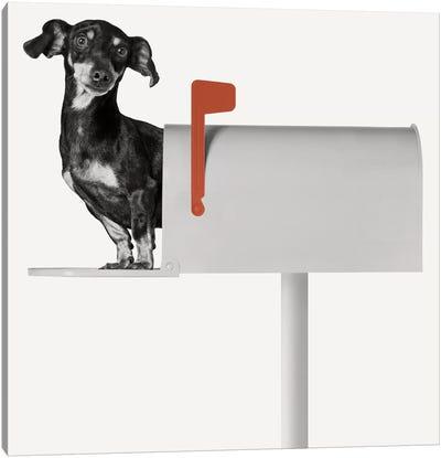 You've Got Mail Canvas Art Print