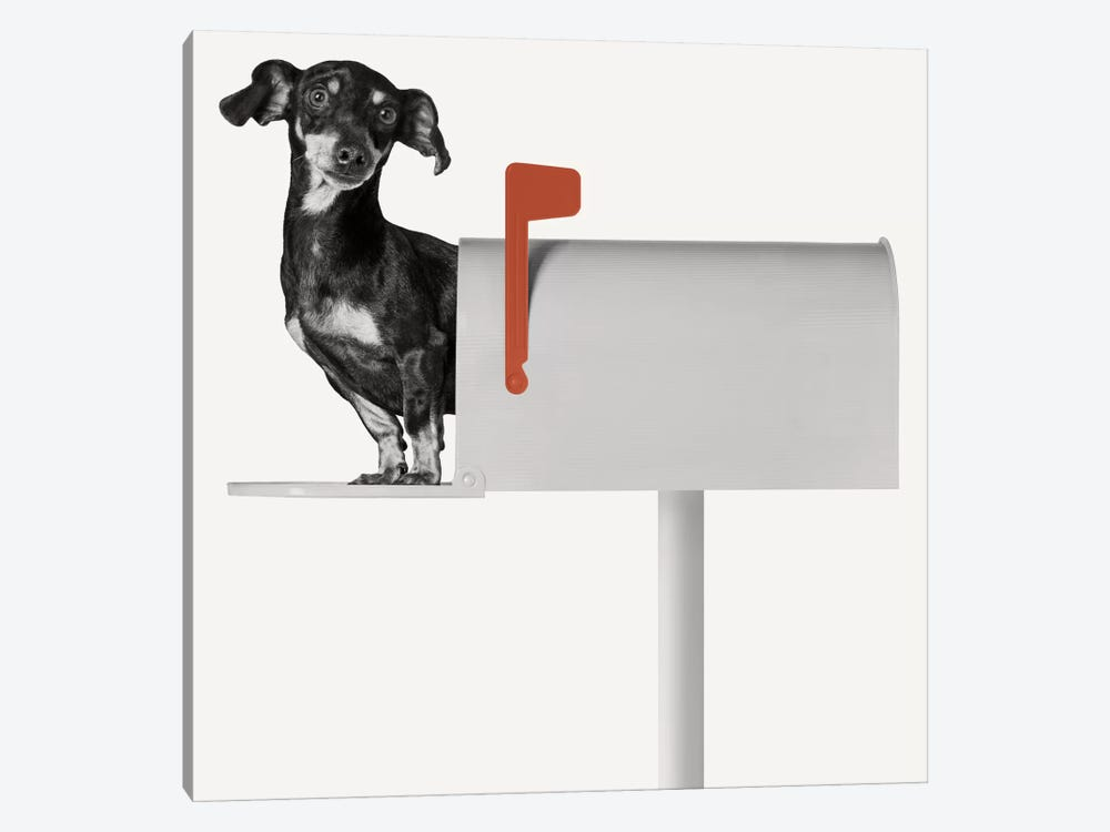 You've Got Mail by Jon Bertelli 1-piece Canvas Art