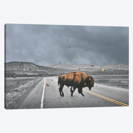 Buffalo Wings Canvas Print #BRU13} by Jason Brueck Canvas Print