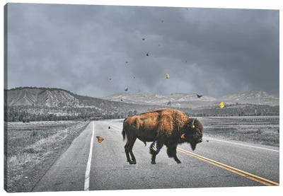 Buffalo Wings Canvas Art Print
