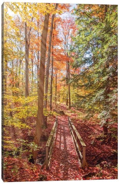 Forest Bridge Canvas Art Print
