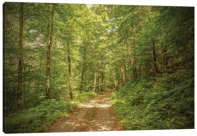 Forest Road Canvas Art Print