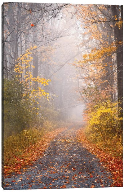Road and Autumn Mist Canvas Art Print