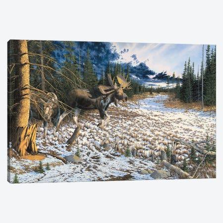 Moose Canvas Print #BSD11} by Bob Schmidt Canvas Print