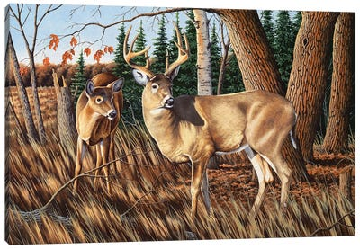 Two Deer Canvas Art Print