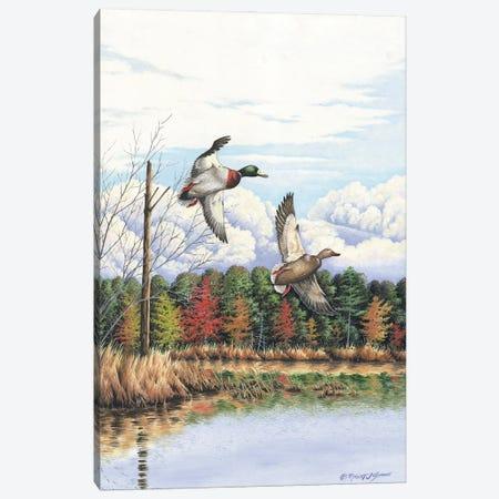 Duck II Canvas Print #BSD5} by Bob Schmidt Canvas Wall Art