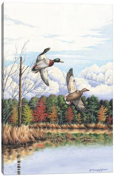 Duck II Canvas Art Print