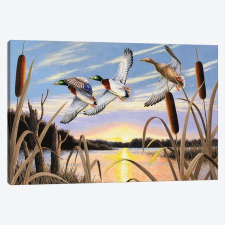 Ducks Canvas Print #BSD6} by Bob Schmidt Canvas Artwork