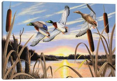 Ducks Canvas Art Print