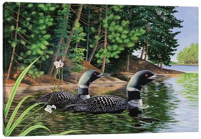 Loons Canvas Art Print