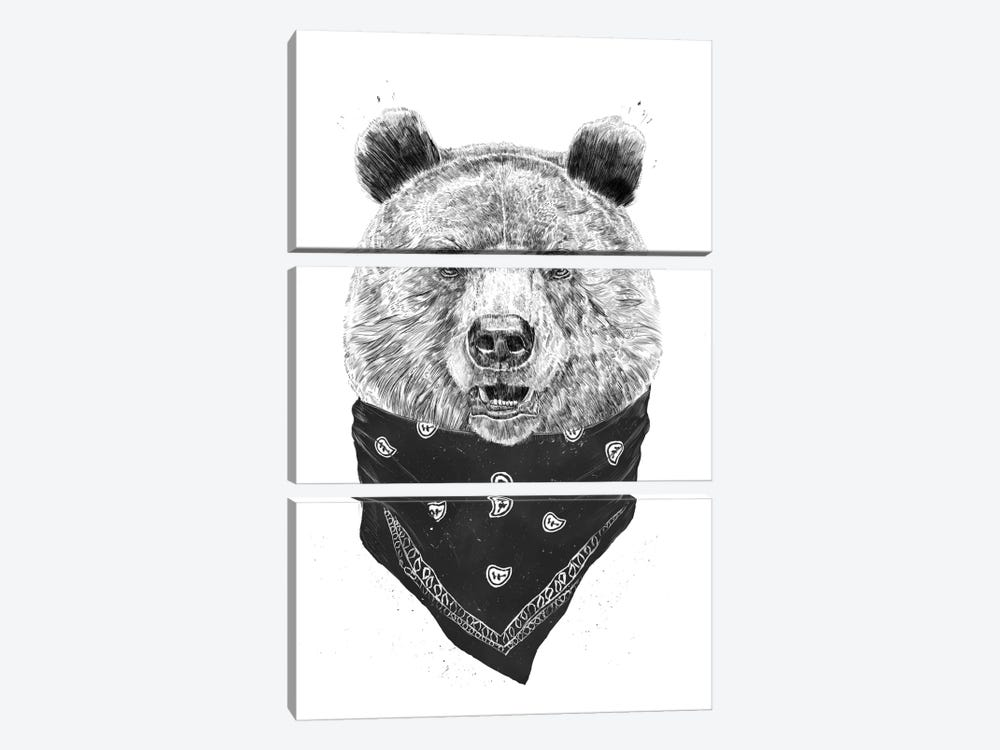 Wild Bear by Balazs Solti 3-piece Canvas Art Print