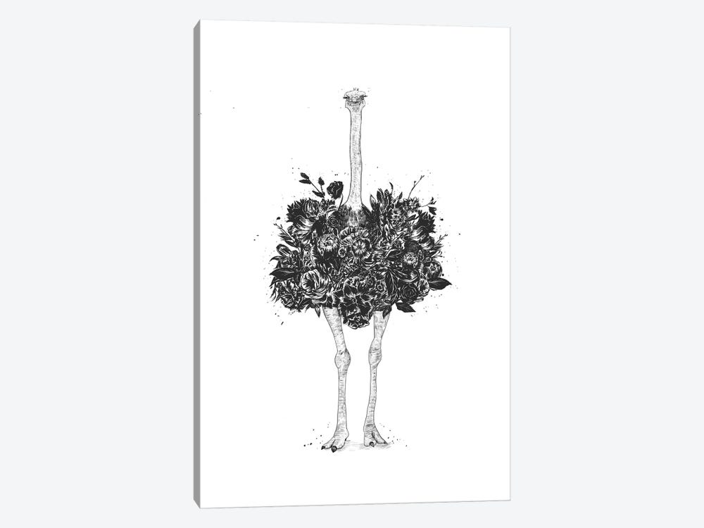 Floral Ostrich by Balazs Solti 1-piece Canvas Art Print