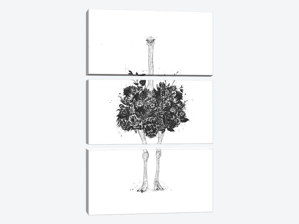 Floral Ostrich by Balazs Solti 3-piece Canvas Art Print