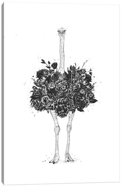 Floral Ostrich Canvas Art Print