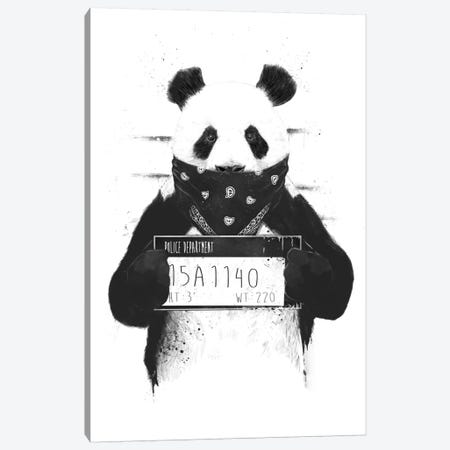 Bad Panda Canvas Print #BSI28} by Balazs Solti Canvas Print