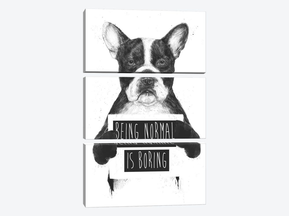 Being Normal Is Boring by Balazs Solti 3-piece Canvas Artwork