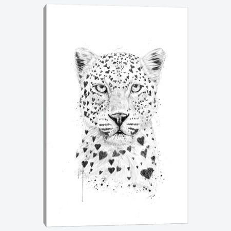 Lovely Leopard Canvas Print #BSI76} by Balazs Solti Canvas Print
