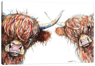 Curious Highland Cows Canvas Art Print