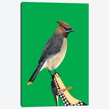 Cedar Waxwing Bird On Shoe Canvas Print #BTM31} by Jackie Besteman Canvas Print